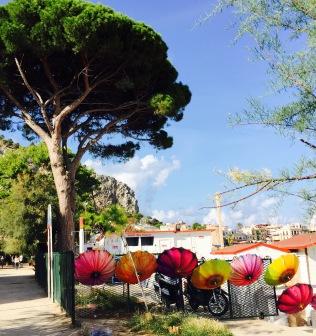 Marine Pine and Umbrellas, Mondello, Sicily.